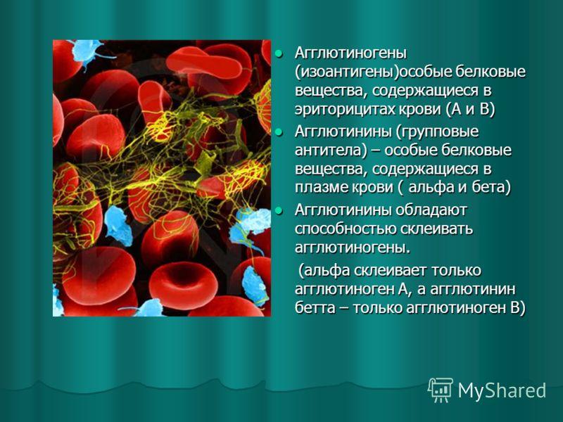 Агглютиногены (изоантигены)особые белковые вещества, содержащиеся в эриторицитах крови (А и В) Агглютиногены (изоантигены)особые белковые вещества, содержащиеся в эриторицитах крови (А и В) Агглютинины (групповые антитела) – особые белковые вещества,