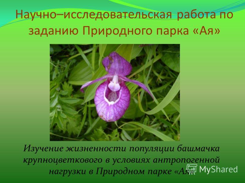 Научно–исследовательская работа по заданию Природного парка «Ая» Изучение жизненности популяции башмачка крупноцветкового в условиях антропогенной нагрузки в Природном парке «Ая»