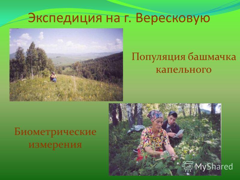 Экспедиция на г. Вересковую Популяция башмачка капельного Биометрические измерения