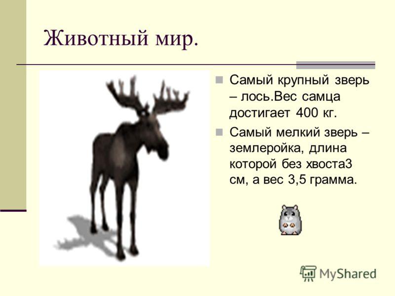 Животный мир. Самый крупный зверь – лось.Вес самца достигает 400 кг. Самый мелкий зверь – землеройка, длина которой без хвоста3 см, а вес 3,5 грамма.