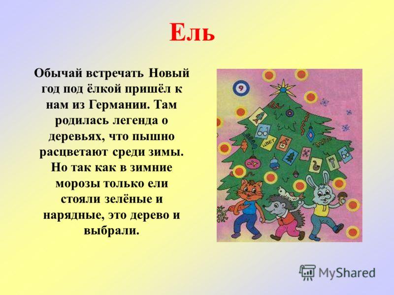 Как к нам пришла елка на новый год