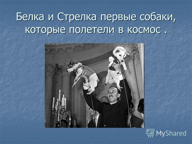 Белка и Стрелка первые собаки, которые полетели в космос.