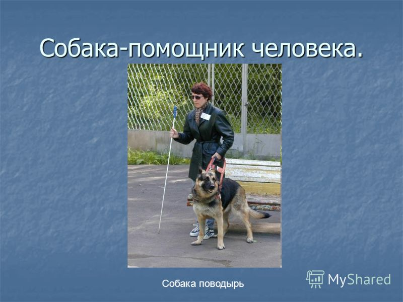 Собака-помощник человека. Собака поводырь