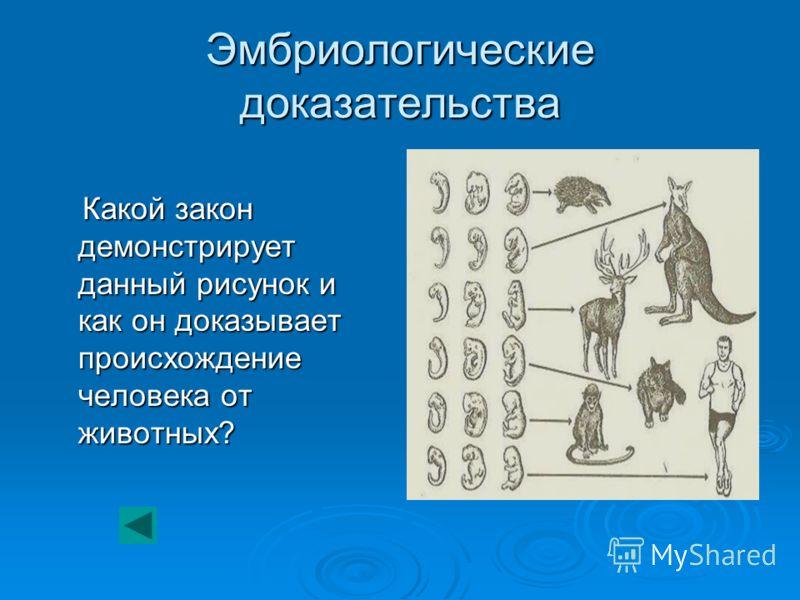 Эмбриологические доказательства Какой закон демонстрирует данный рисунок и как он доказывает происхождение человека от животных? Какой закон демонстрирует данный рисунок и как он доказывает происхождение человека от животных?