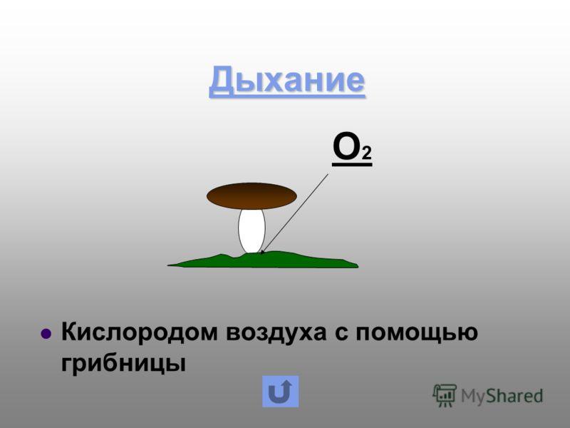 Дыхание Кислородом воздуха с помощью грибницы О2О2