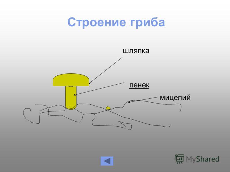 Строение гриба шляпка мицелий пенек