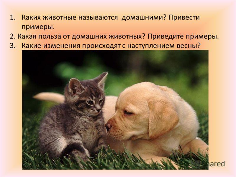 1.Каких животные называются домашними? Привести примеры. 2. Какая польза от домашних животных? Приведите примеры. 3.Какие изменения происходят с наступлением весны?