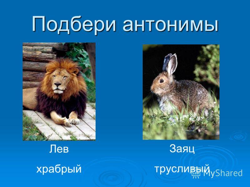 Подбери антонимы Лев храбрый Заяц трусливый