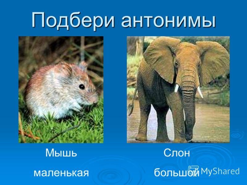 Подбери антонимы Мышь маленькая Слон большой