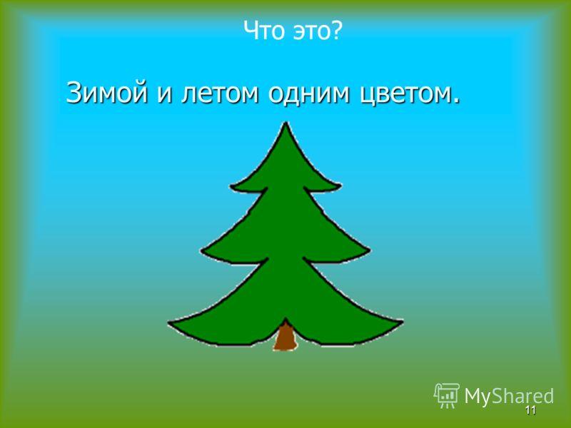 Зимой и летом одним цветом. 11 Что это?