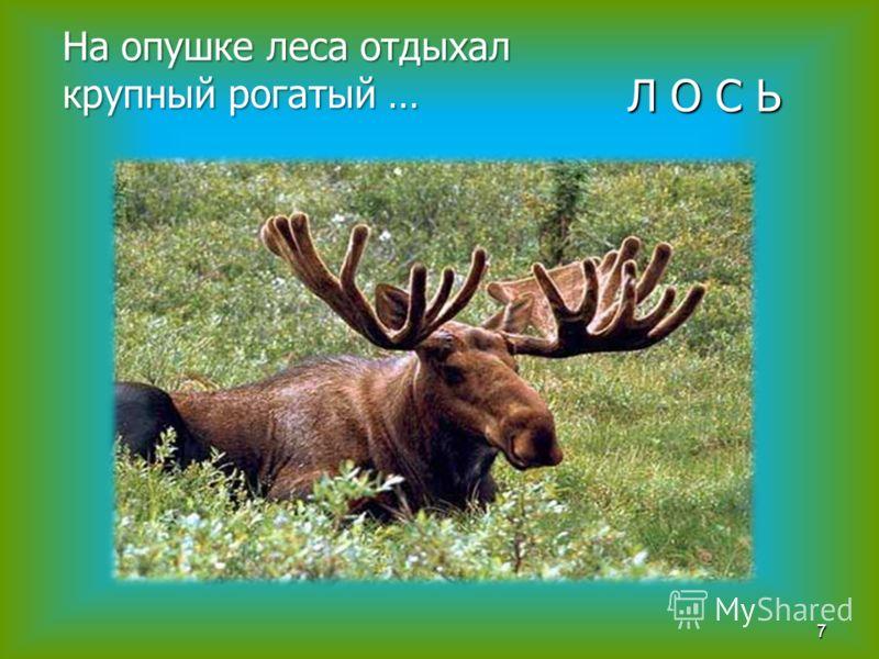 На опушке леса отдыхал крупный рогатый … 7 Л О С Ь