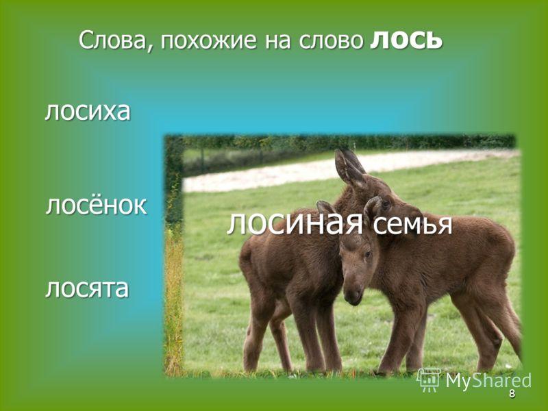 8 Слова, похожие на слово лось лосиха лосёнок лосята лосиная семья