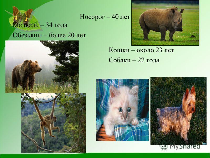 Носорог – 40 лет Медведь – 34 года Обезьяны – более 20 лет Кошки – около 23 лет Собаки – 22 года