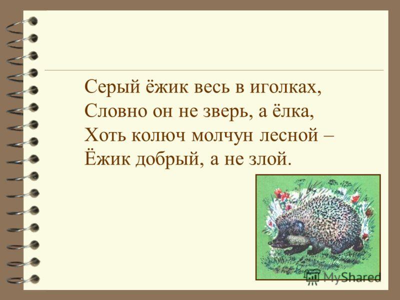Серый ёжик весь в иголках, Словно он не зверь, а ёлка, Хоть колюч молчун лесной – Ёжик добрый, а не злой.