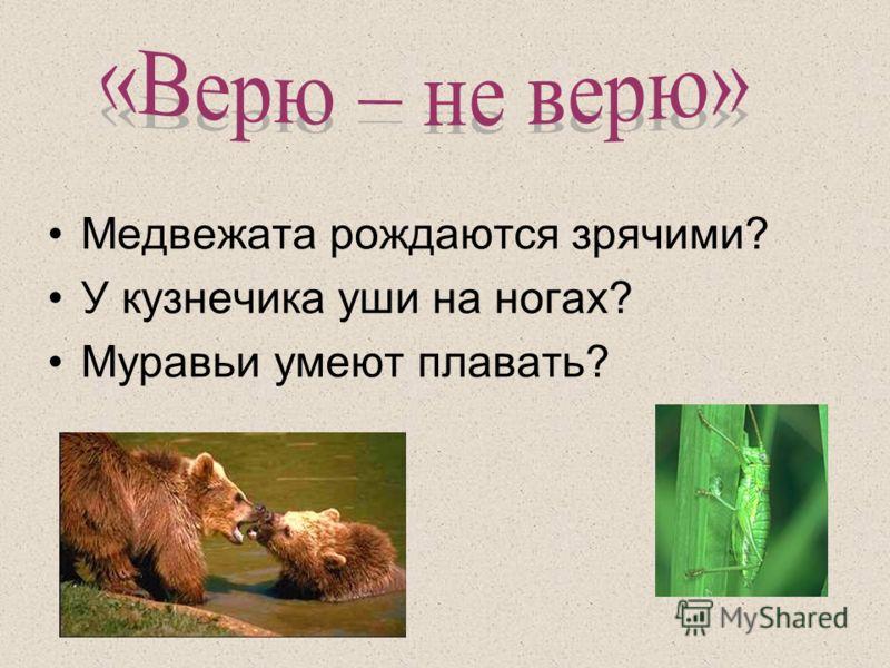 Медвежата рождаются зрячими? У кузнечика уши на ногах? Муравьи умеют плавать?