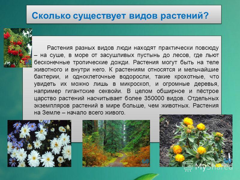 Сколько существует видов растений? Растения разных видов люди находят практически повсюду – на суше, в море от засушливых пустынь до лесов, где льют б