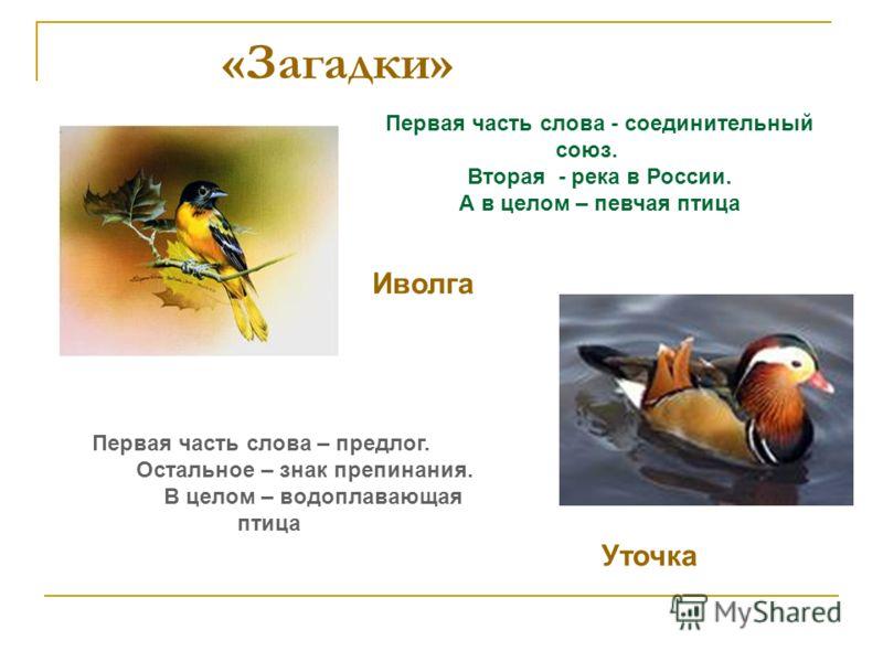 «Загадки» Первая часть слова - соединительный союз. Вторая - река в России. А в целом – певчая птица Иволга Первая часть слова – предлог. Остальное – знак препинания. В целом – водоплавающая птица Уточка