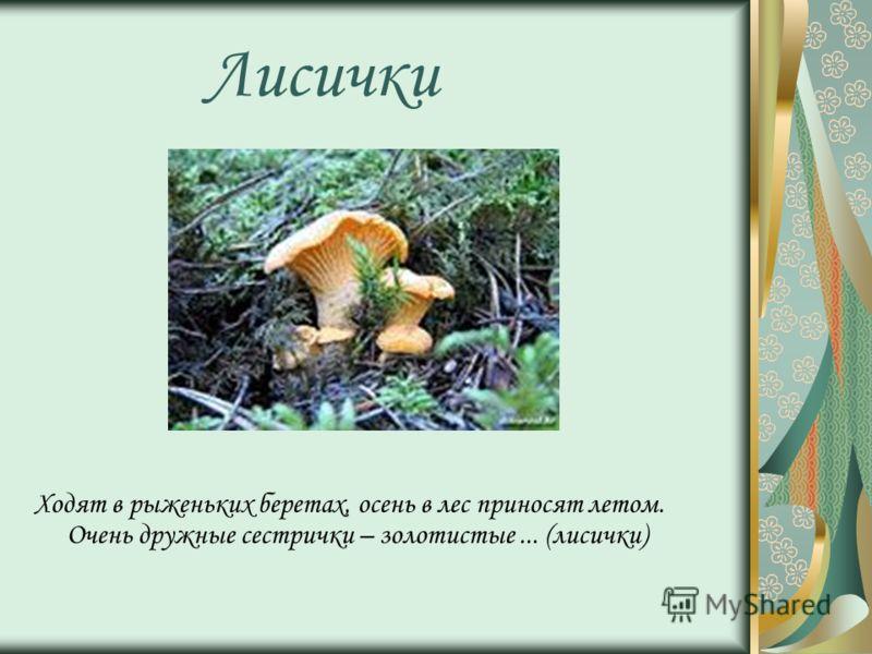 Лисички Ходят в рыженьких беретах, осень в лес приносят летом. Очень дружные сестрички – золотистые... (лисички)