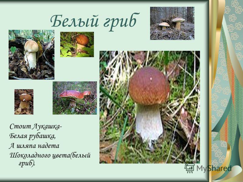 Белый гриб Стоит Лукашка- Белая рубашка, А шляпа надета Шоколадного цвета(белый гриб).