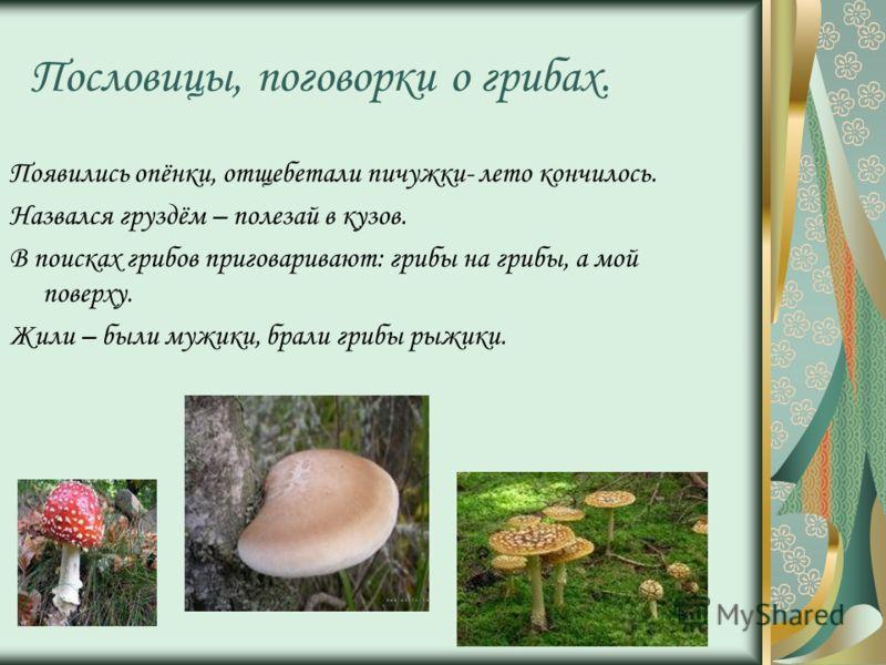 Пословицы, поговорки о грибах. Появились опёнки, отщебетали пичужки- лето кончилось. Назвался груздём – полезай в кузов. В поисках грибов приговаривают: грибы на грибы, а мой поверху. Жили – были мужики, брали грибы рыжики.