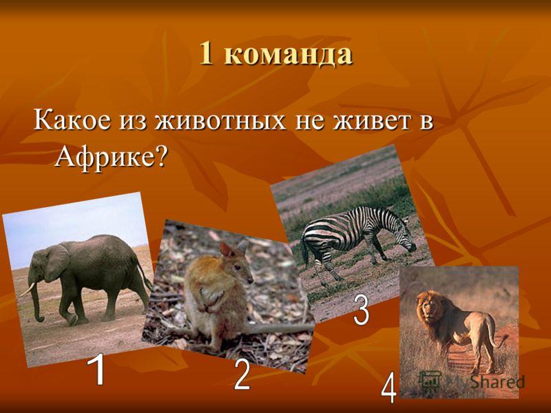 1 команда Какое из животных не живет в Африке?