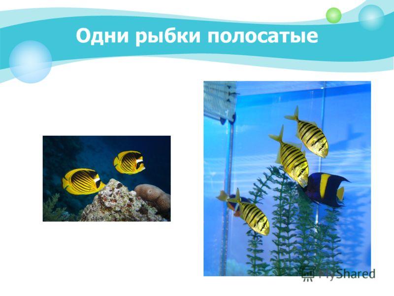 Одни рыбки полосатые