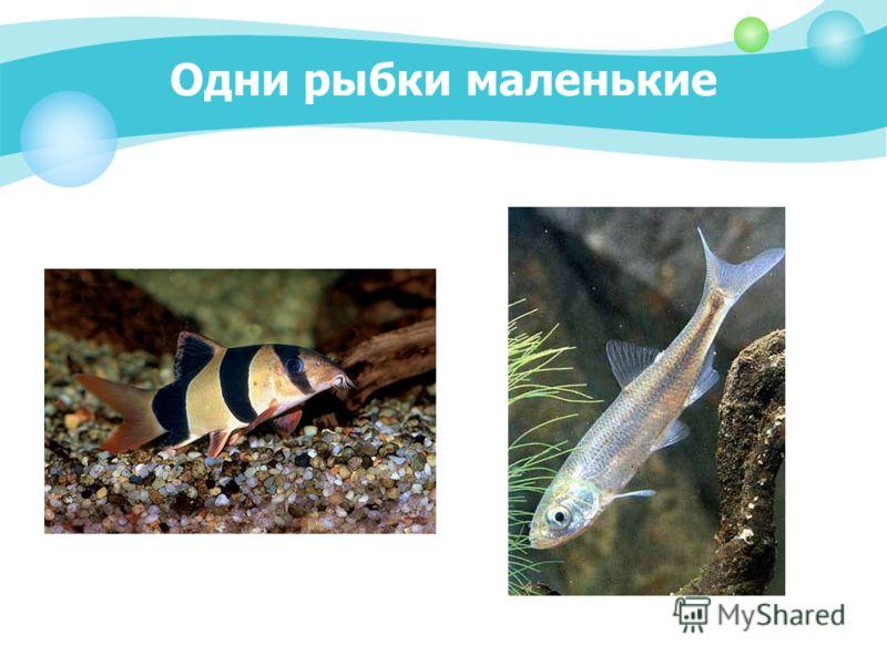 Одни рыбки маленькие