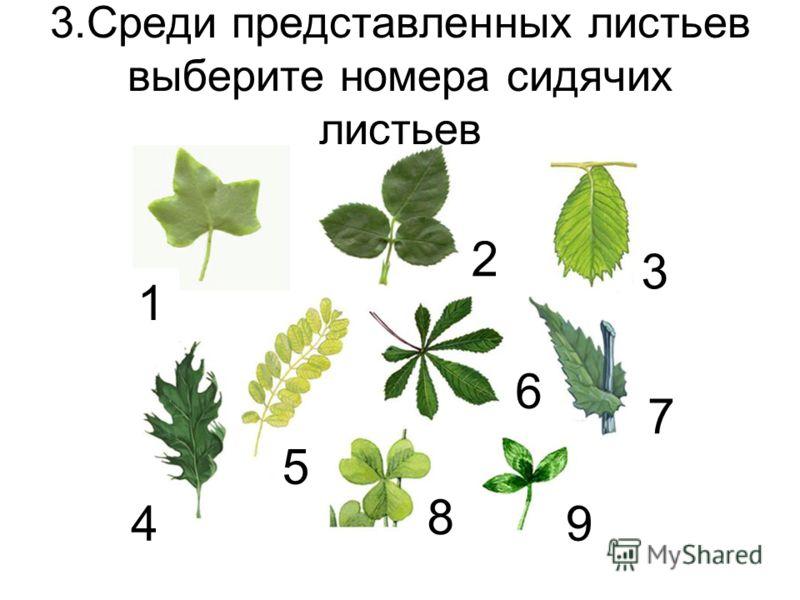 3.Среди представленных листьев выберите номера сидячих листьев 1 2 3 4 5 6 7 89 9
