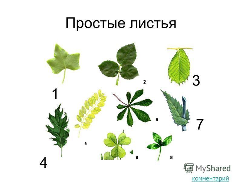 Простые листья 1 3 4 7 комментарий