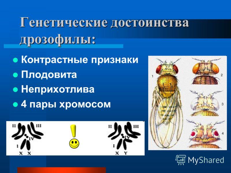 Генетические достоинства дрозофилы: Контрастные признаки Плодовита Неприхотлива 4 пары хромосом