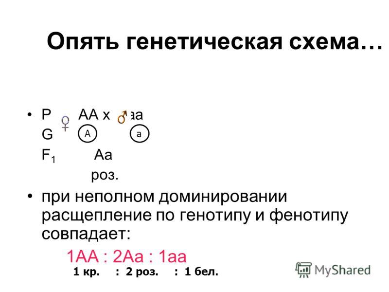 Опять генетическая схема… Р АА х аа G F 1 Aa роз. при неполном доминировании расщепление по генотипу и фенотипу совпадает: 1АА : 2Аа : 1аа 1 кр. : 2 роз. : 1 бел. Aa