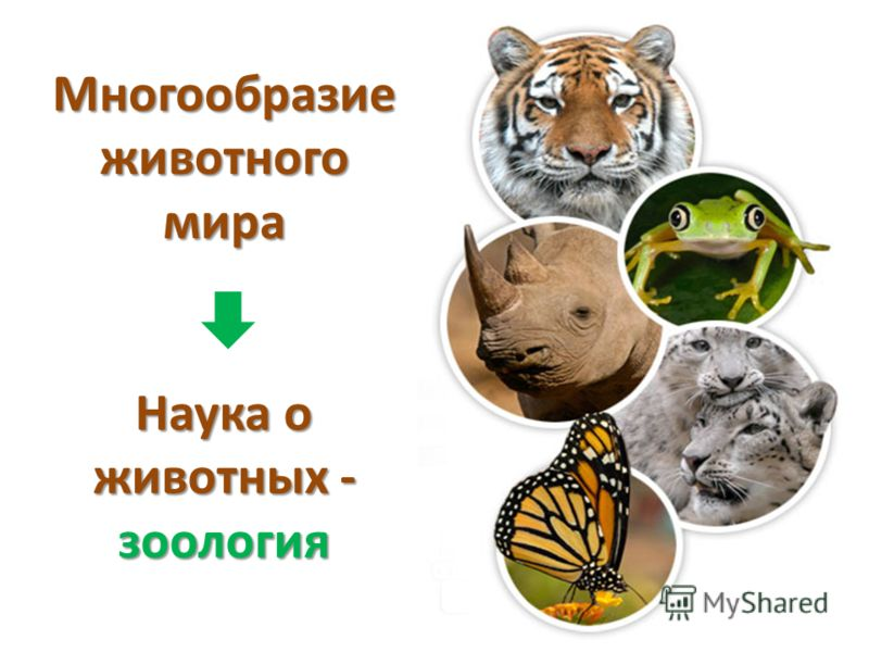 Многообразие животного мира Наука о животных - зоология
