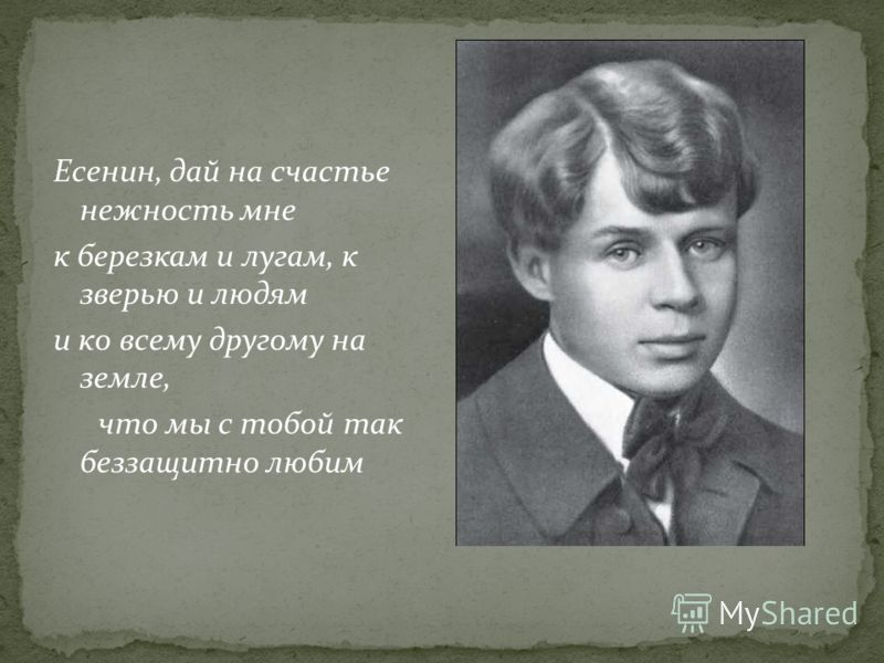 Есенин, дай на счастье нежность мне к березкам и лугам, к зверью и людям и ко всему другому на земле, что мы с тобой так беззащитно любим