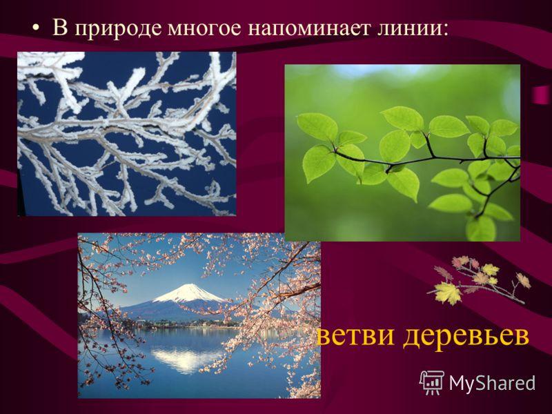 ветви деревьев В природе многое напоминает линии: