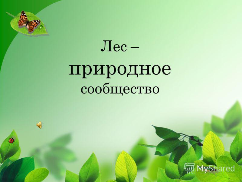 Лес – <a href='http://www.myshared.ru/slide/121438/' title='природные сообщества'>природное сообщество</a>