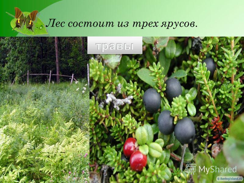 Лес состоит из трех ярусов.