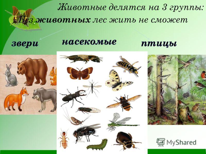 делятся на схемах животные