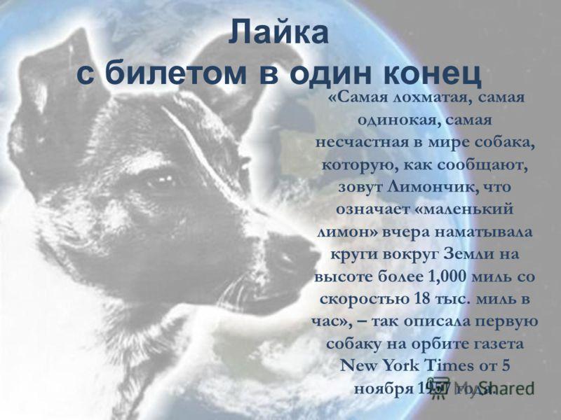 Лайка с билетом в один конец «Самая лохматая, самая одинокая, самая несчастная в мире собака, которую, как сообщают, зовут Лимончик, что означает «маленький лимон» вчера наматывала круги вокруг Земли на высоте более 1,000 миль со скоростью 18 тыс. ми