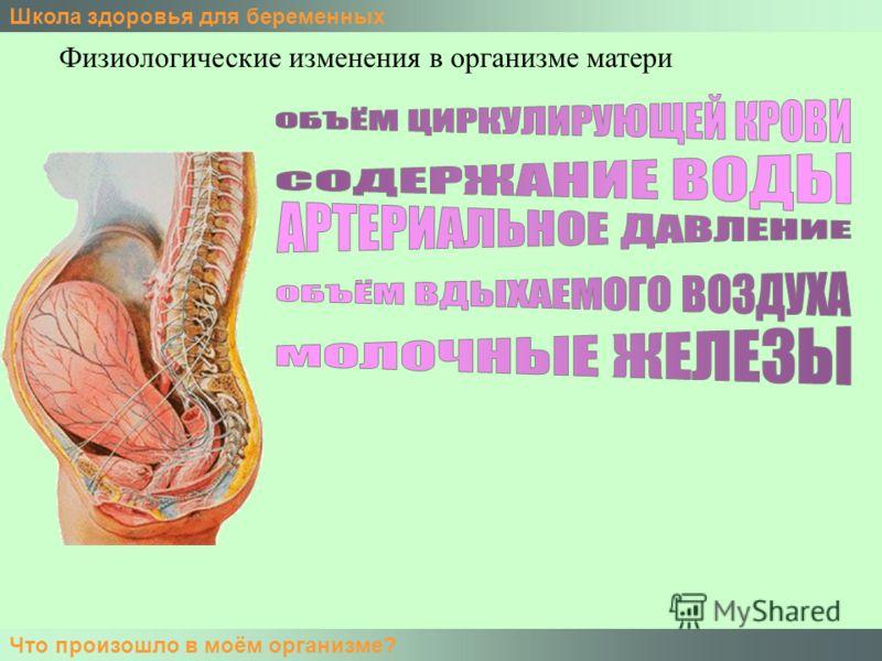 Школа здоровья для беременных Что произошло в моём организме? Физиологические изменения в организме матери