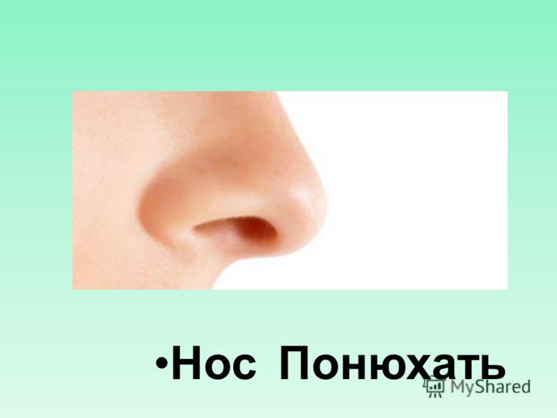 Нос Понюхать
