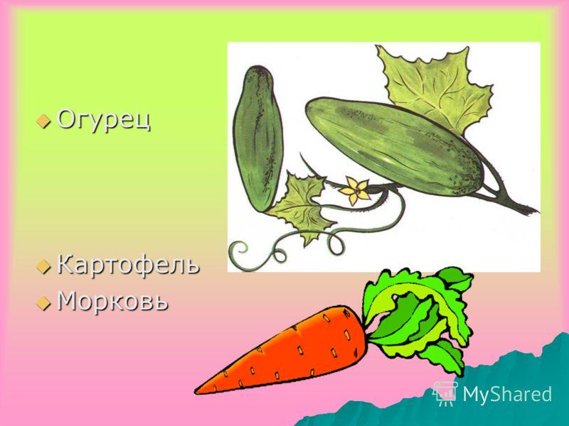 Огурец Огурец Картофель Картофель Морковь Морковь