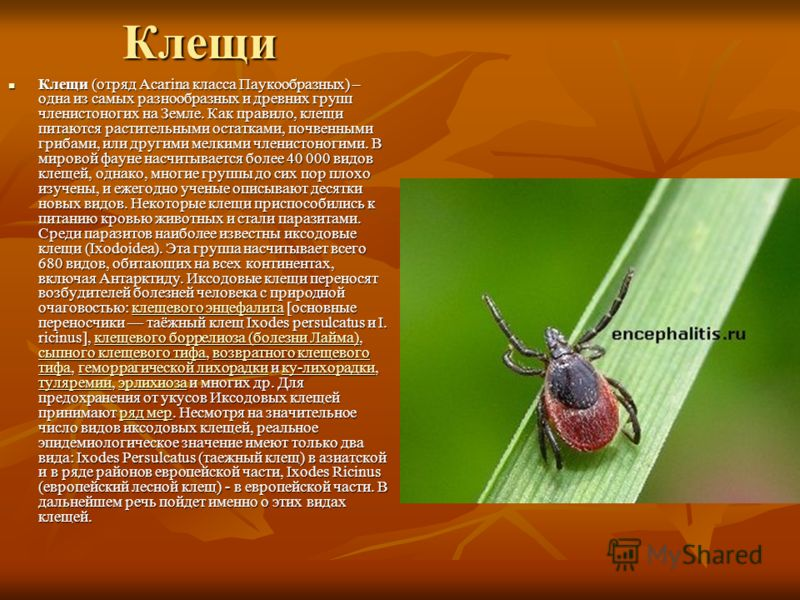 Клещи Клещи (отряд Acarina класса Паукообразных) – одна из самых разнообразных и древних групп членистоногих на Земле. Как правило, клещи питаются растительными остатками, почвенными грибами, или другими мелкими членистоногими. В мировой фауне насчит