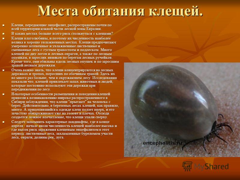 Места обитания клещей. Клещи, передающие энцефалит, распространены почти по всей территории южной части лесной зоны Евразии. Клещи, передающие энцефалит, распространены почти по всей территории южной части лесной зоны Евразии. В каких местах больше в
