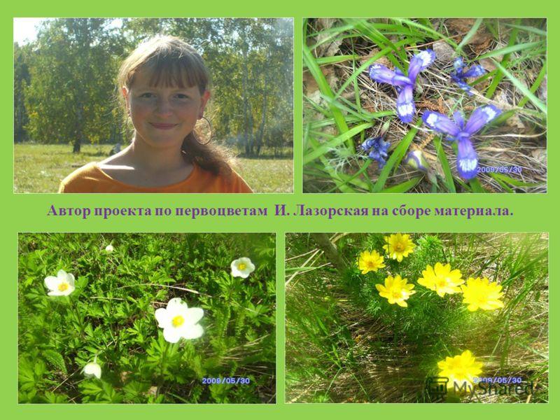 Автор проекта по первоцветам И. Лазорская на сборе материала.