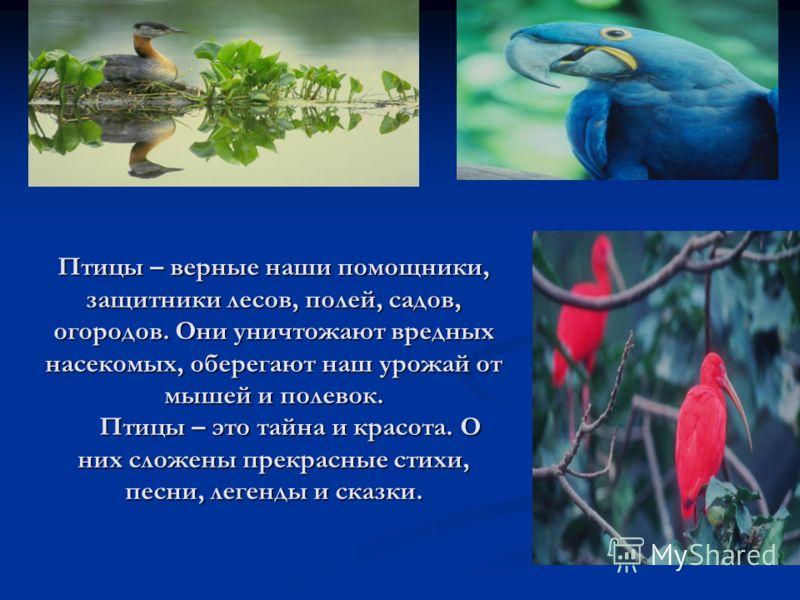 Птицы – верные наши помощники, защитники лесов, полей, садов, огородов. Они уничтожают вредных насекомых, оберегают наш урожай от мышей и полевок. Птицы – это тайна и красота. О них сложены прекрасные стихи, песни, легенды и сказки.