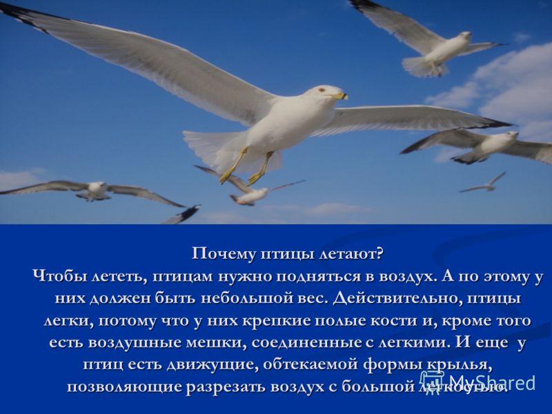 Почему птицы летают? Чтобы лететь, птицам нужно подняться в воздух. А по этому у них должен быть небольшой вес. Действительно, птицы легки, потому что у них крепкие полые кости и, кроме того есть воздушные мешки, соединенные с легкими. И еще у птиц е