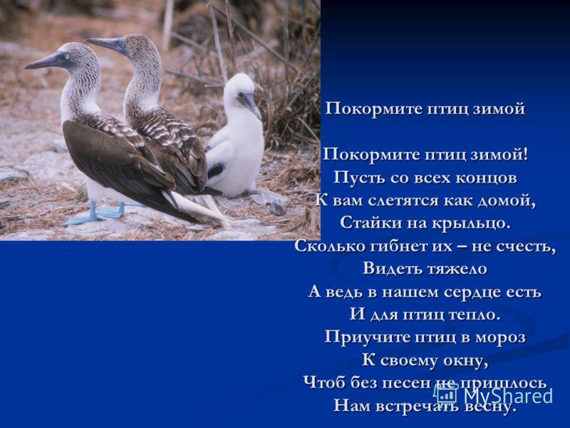Покормите птиц зимой Покормите птиц зимой! Пусть со всех концов К вам слетятся как домой, Стайки на крыльцо. Сколько гибнет их – не счесть, Видеть тяжело А ведь в нашем сердце есть И для птиц тепло. Приучите птиц в мороз К своему окну, Чтоб без песен