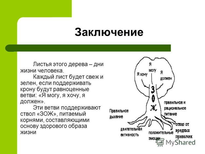 Заключение Листья этого дерева – дни жизни человека. Каждый лист будет свеж и зелен, если поддерживать крону будут равноценные ветви: «Я могу, я хочу, я должен». Эти ветви поддерживают ствол «ЗОЖ», питаемый корнями, составляющими основу здорового обр