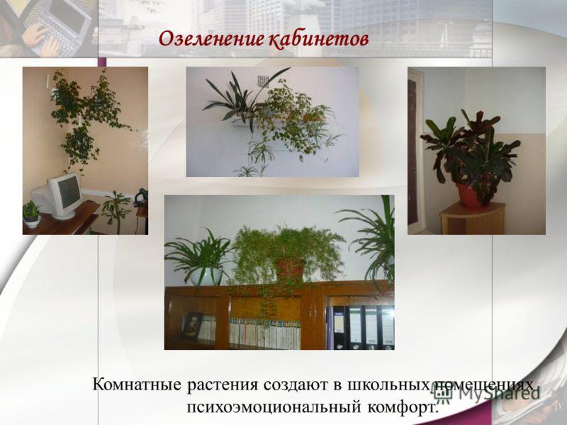 Озеленение кабинетов Комнатные растения создают в школьных помещениях психоэмоциональный комфорт.