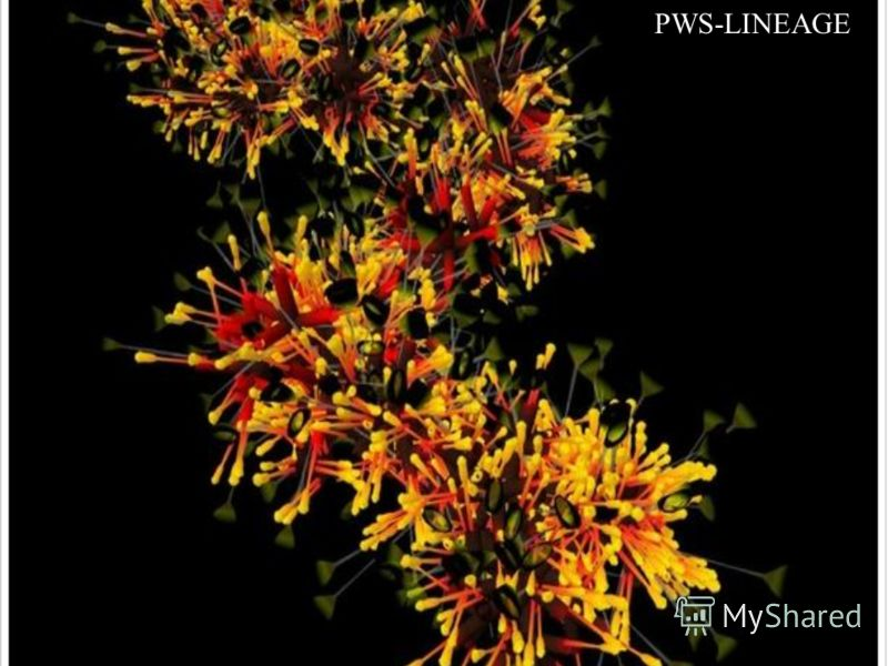 PWS-LINEAGE